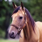 image for If you love working around horses we have many of projects that need your help